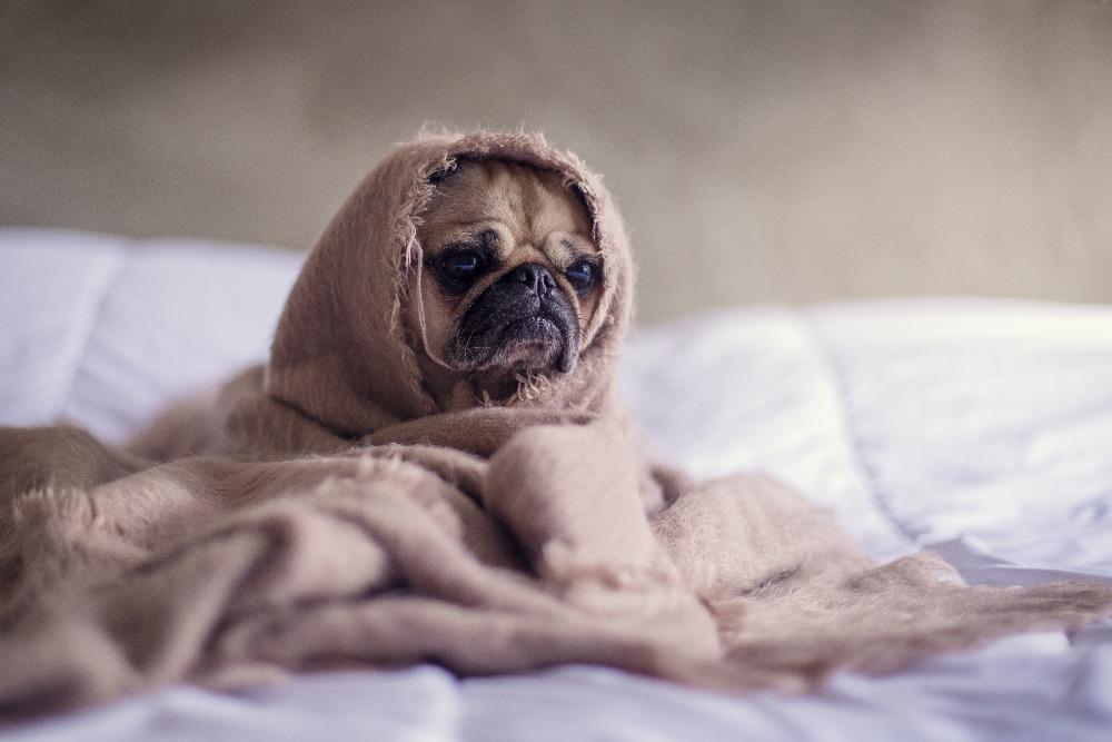 hund depressiv